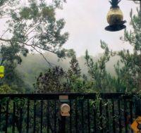 Rainy Morning in Hayward Hills