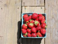 Maryland Strawberries - Best anywhere