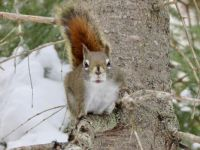 Peanut yelling for his peanut