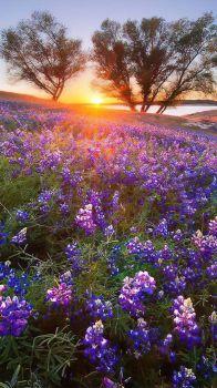 Landscape Beauty