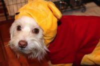 Pooh Snow Suit