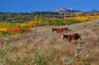 Autumn in Baldwin, Colorado