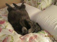 Lazy Loki