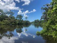 South Creek, Oscar Scherer State Park, Osprey, FL