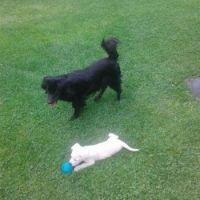 Betty and Aron my new dog friends ♥