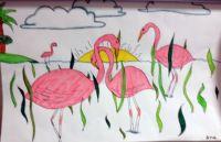 Ana's flamingo