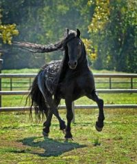 Head-Turning Stallion, Frederik the Great, 20, Considered the World's Most Handsome Horse