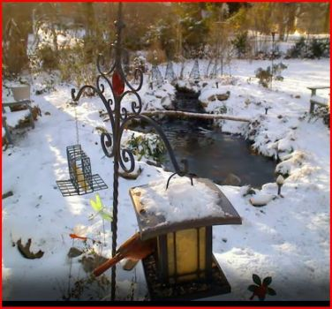 Snowy feeders with cardinal 12 21 12