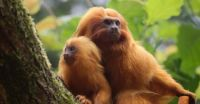 3  ~  Happy Fathersday.  :-))  ~  Just finished brushing their golden locks.