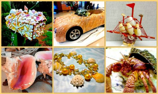 Things to do with Shells!