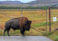 Wichita Mountains  Wildlife Refuge Oklahoma