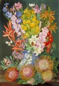 Wild Flowers of Ceres, South Africa -1882