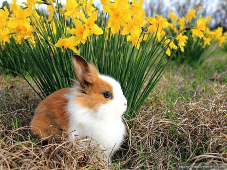 spring-animals-wallpapers-1024x768