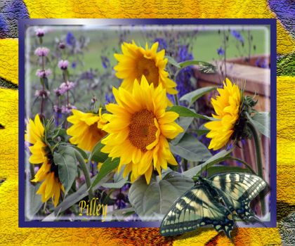 flowers.yellow.SUNFLOWERS.butterfly.yellow