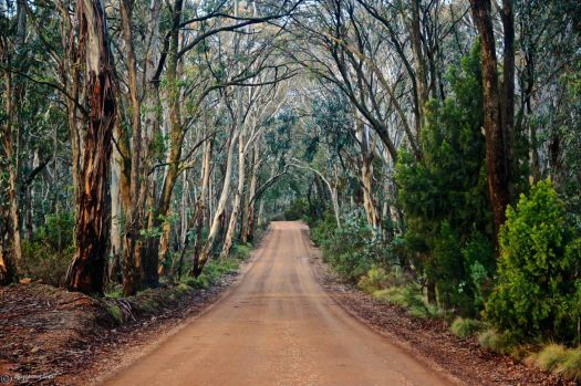 The road to Mount Canololas, just outside Orange, NSW, Aus