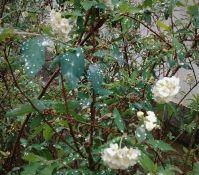 flores pós chuva