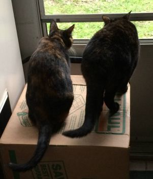 Pixie and Ruby watching birds!