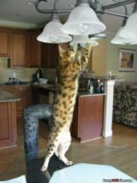 How many Cats does it take to  change a Light Bulb
