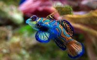 Tropical fish007