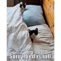 No place on the bed !!!