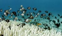 fish-and-coral