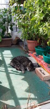 Coco 3. Snoozing in the greenhouse