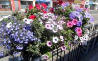 Roadside Flower Baskets (1)
