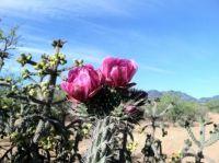 Springtime in Arizona