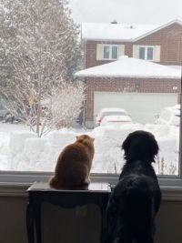 Let us outside!  Pete the cat and Otis the dog