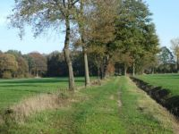 The area around Winterswijk is full of woods and small meadows and fields, like you see here.