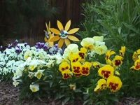 Our flower garden back in California