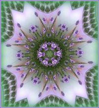 Moje levandule / My Lavender - Kaleido