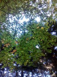 Leaves 1 / Levelek