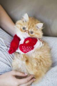 Marvin loves hugs