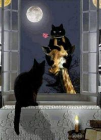 Cats courting and a full moon