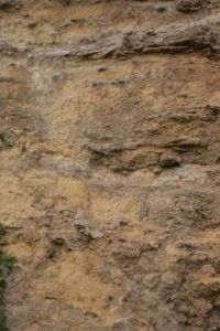 Limestone Quarry Face