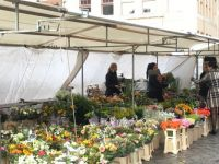 Dutch Flower Market