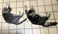 Synchronized Layabouts - Summer Catolympics Event?? (Part 1) 😊😊