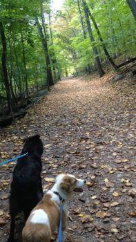 Kodi and Tanner on a walk!
