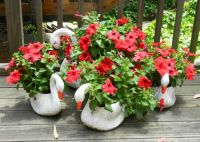 Petunia's and Swans