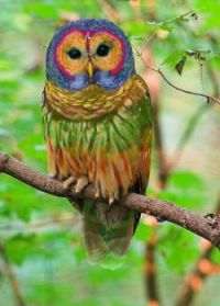 This is not a real owl :-)