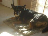 Bishka, 11th birthday