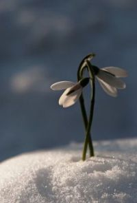 Mooi boven de sneeuw