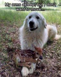 The deer's best friend