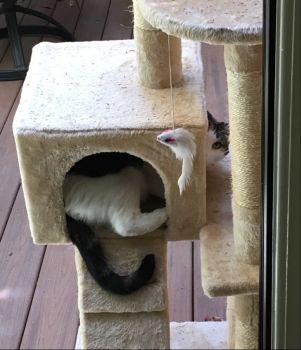 Kitty comfort