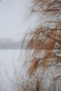 Weeping willow @ maumee bay state park in the snow