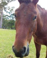 Julian the horse