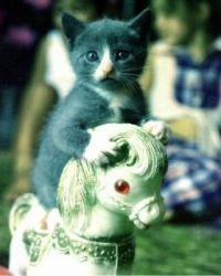 An oldie, but soooo cute...