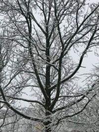 02_07_21_Snow_tree