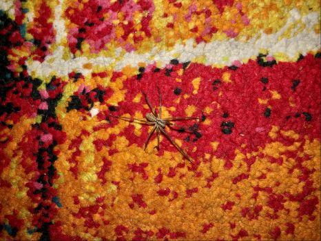 Carpet surprise